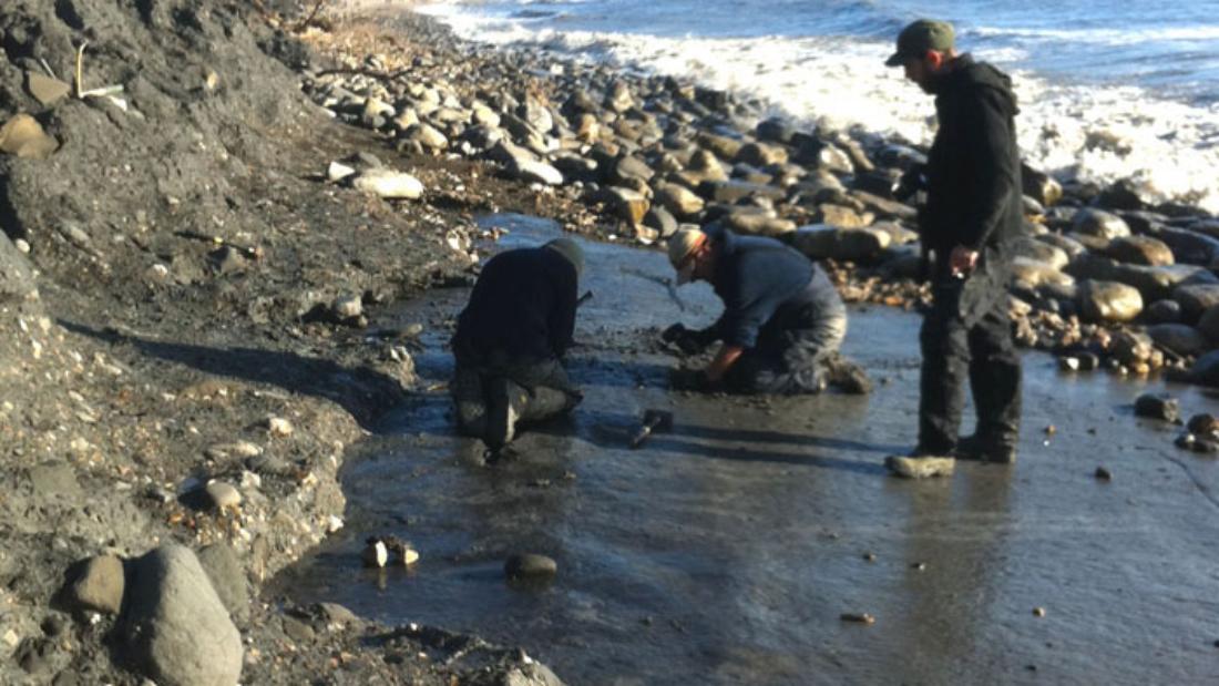 ichthyosaur find